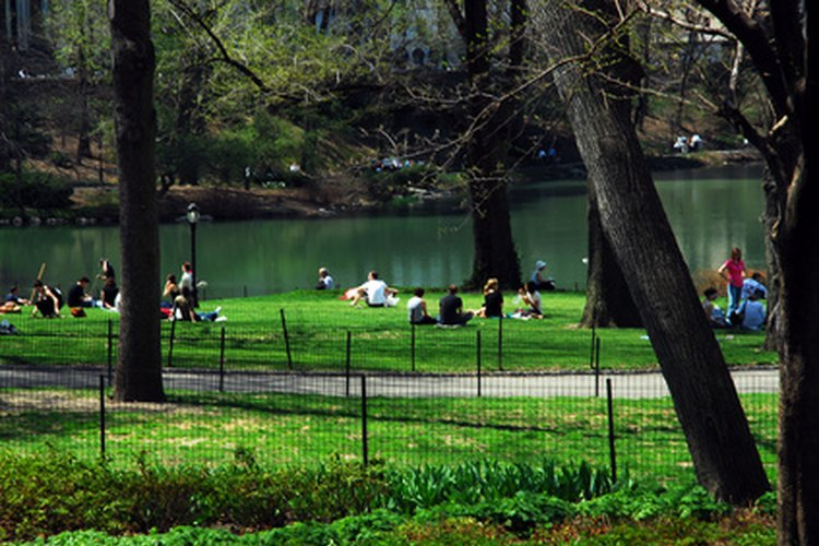 View of central park and pond showing families sitting on picnic blankets.