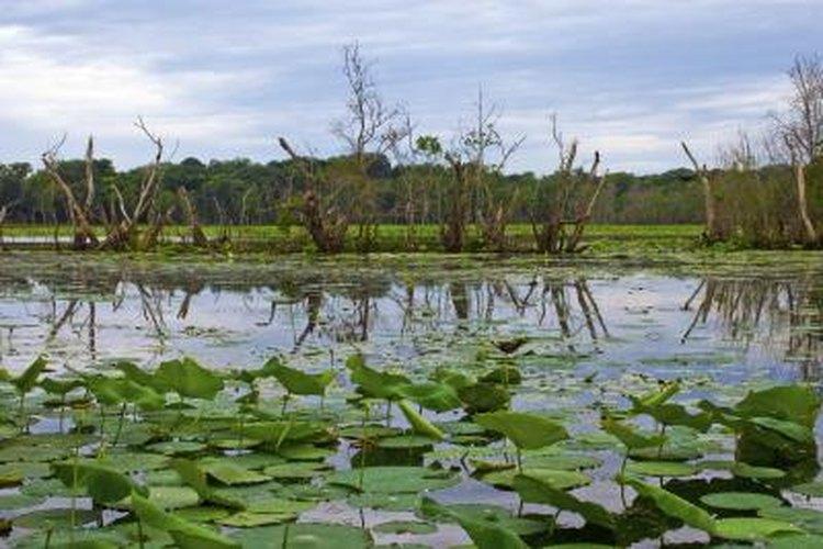 Lake at Brazos Bend State Park