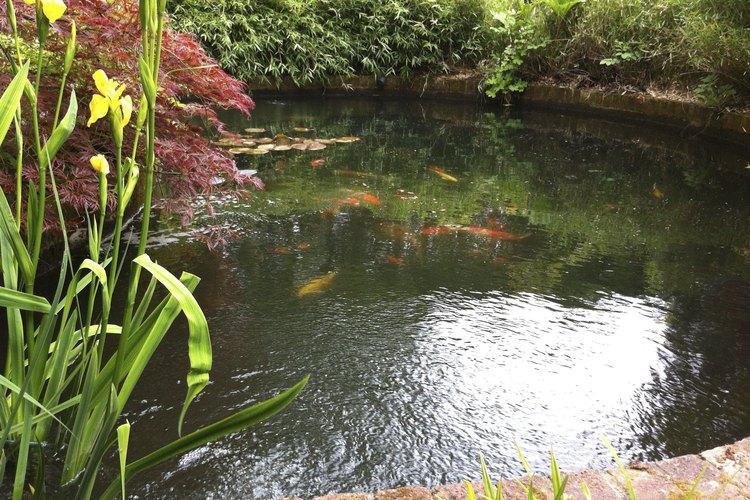 C mo hacer un estanque de truchas muy fitness for Construir estanque