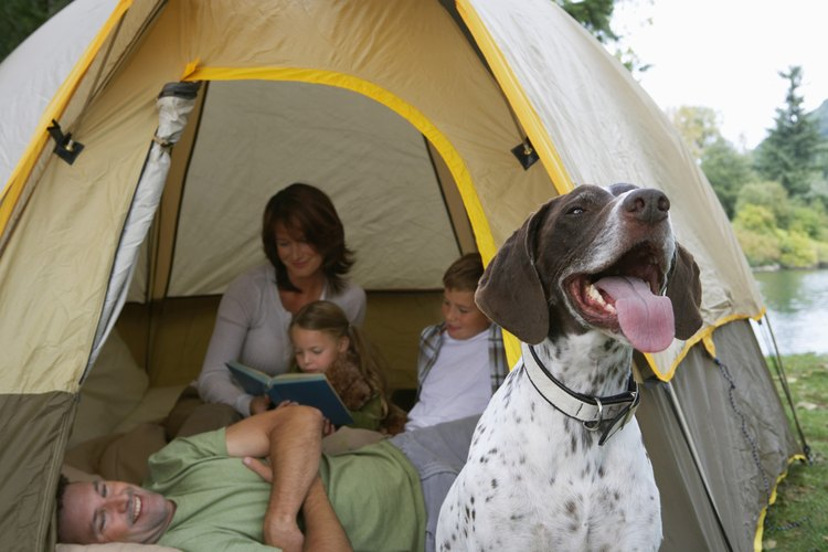 A young family camping in a tent outside.