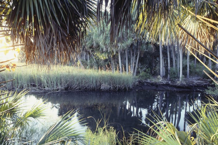 Primitive view of the Florida Everglades.