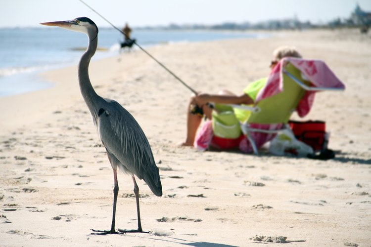 A person fishes on St. George Island in Florida while a heron stands by.