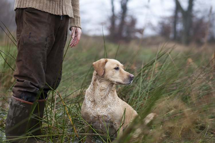 A close-up of a hunter standing in a marsh with his dog.