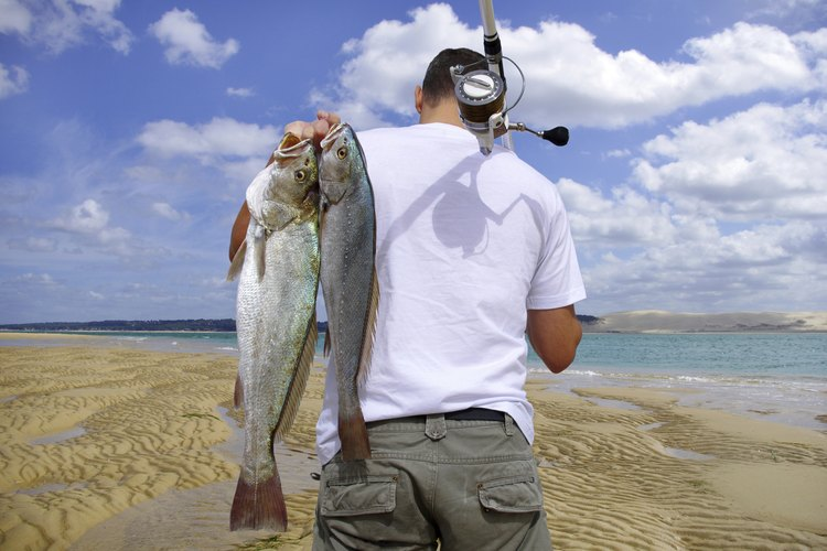 A surf fisherman carries two fish over his shoulder on the beach.