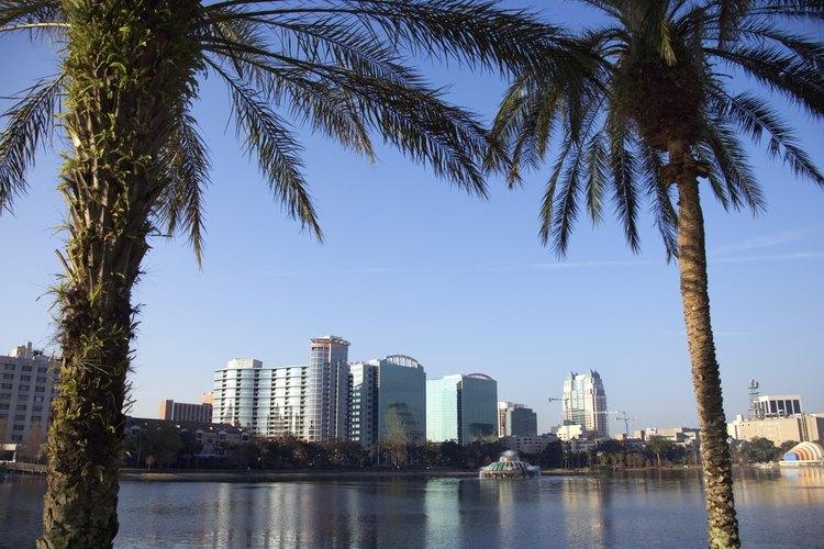 Orlando skyline, framed by palm trees.