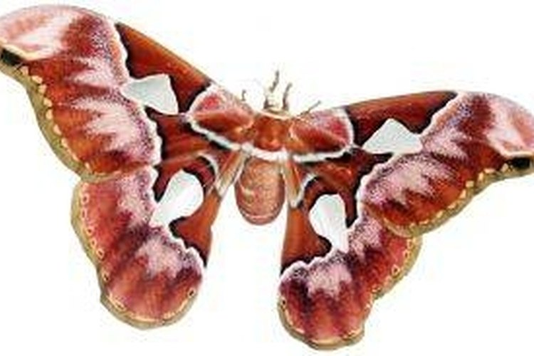 Frame Butterflies