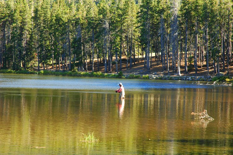 Recommended rods and reels for steelhead fishing can increase your success.