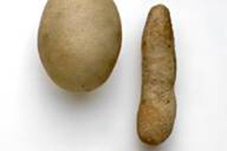 Variedad de huevos de serpiente.