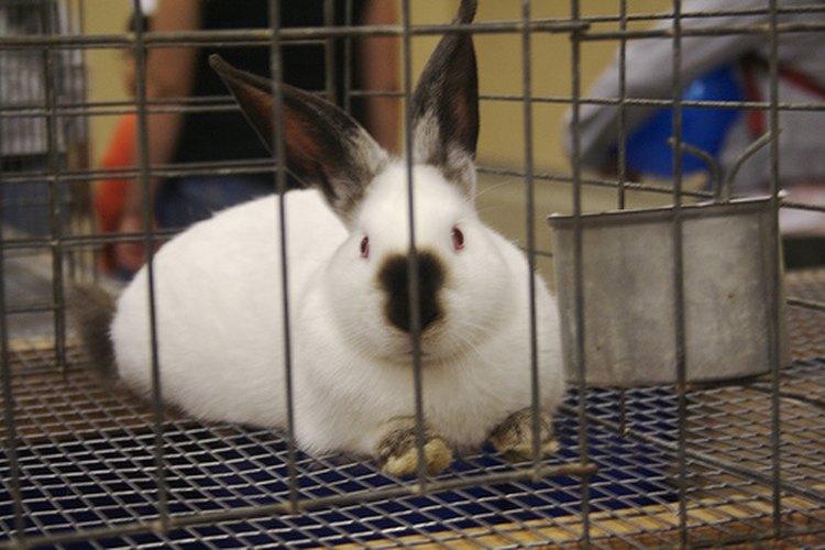 ¿Tienes a tus conejos adentro?