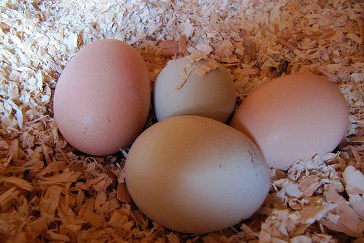 Aumenta la producción de huevos.