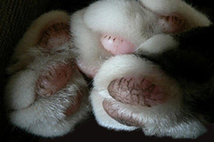 Almohadillas de gato.