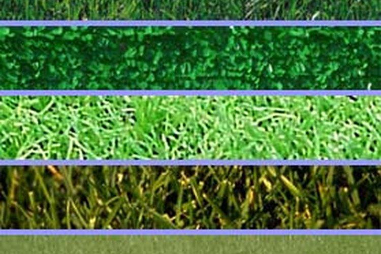 Básicamente existen dos tipos de plantas, las de clima frío y las de clima cálido.