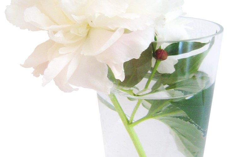 Alimenta flores cortadas.