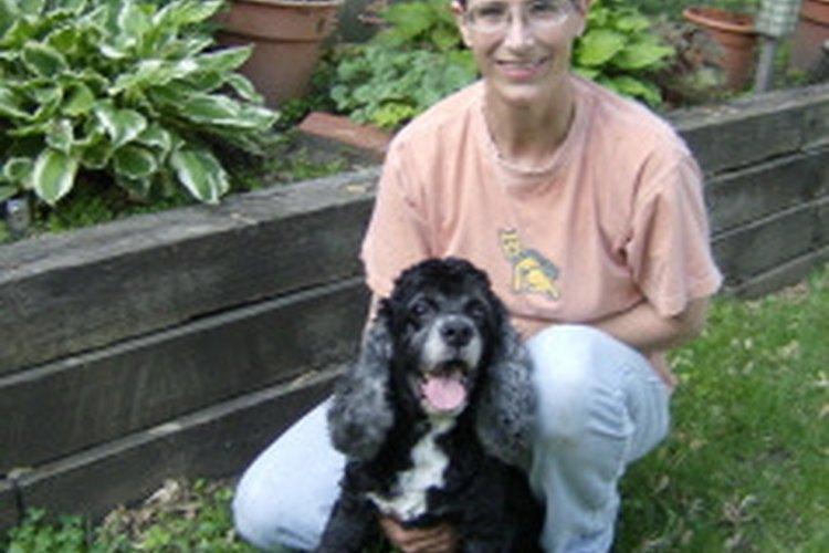 Aprender a calmar correctamente a un cachorro excitado es la primera etapa de su entrenamiento.