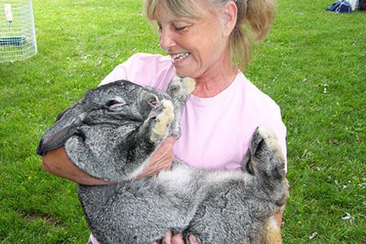Un conejo gigante