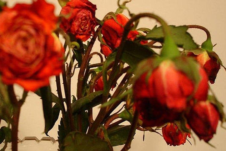 Los romances extramaritales pueden provocar a la otra mujer un daño emocional.