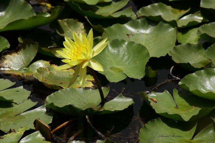Hazlo tu mismo filtro biol gico para estanque for Filtros de agua para estanques de peces