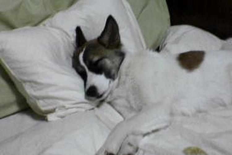 El confort está en el colchón.
