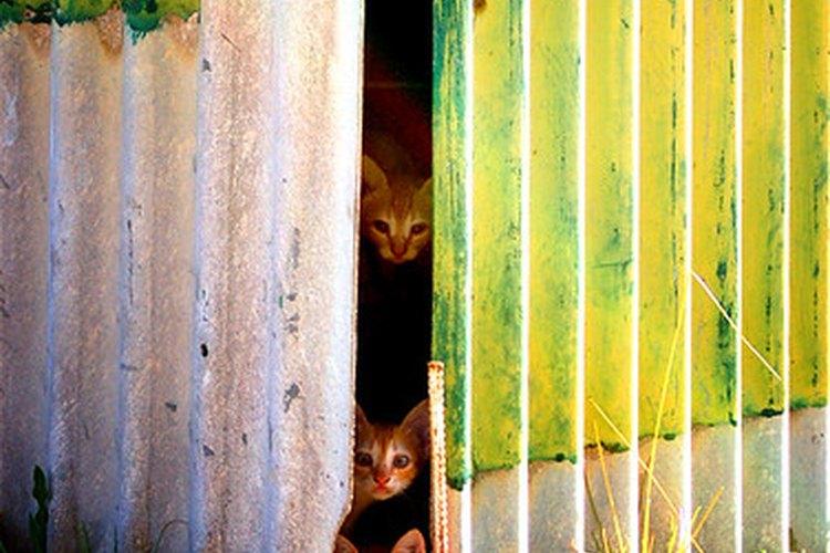 Los gatos del exterior son más propensos a tener gusanos y otros parásitos.