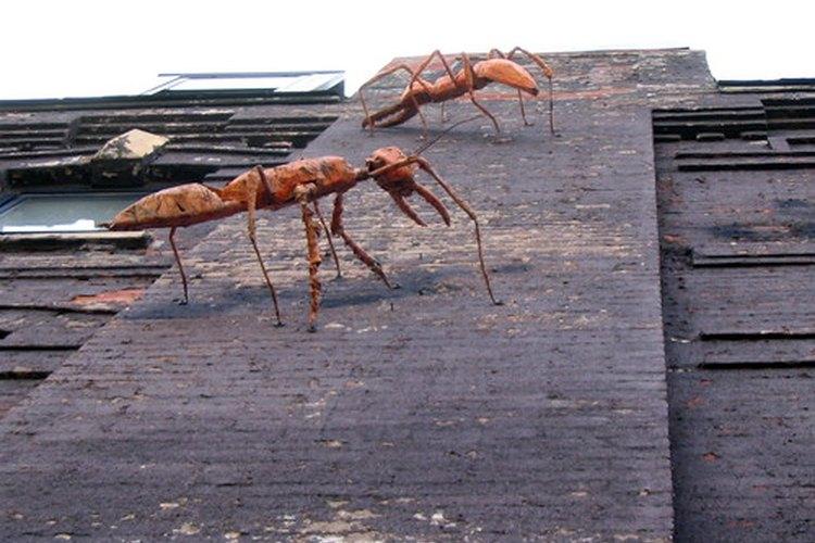 Insectos que se arrastran.