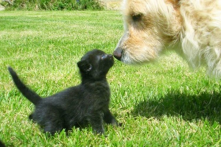 Los perros y gatos pueden ser amigos, pero a veces uno puede contagiar al otro.