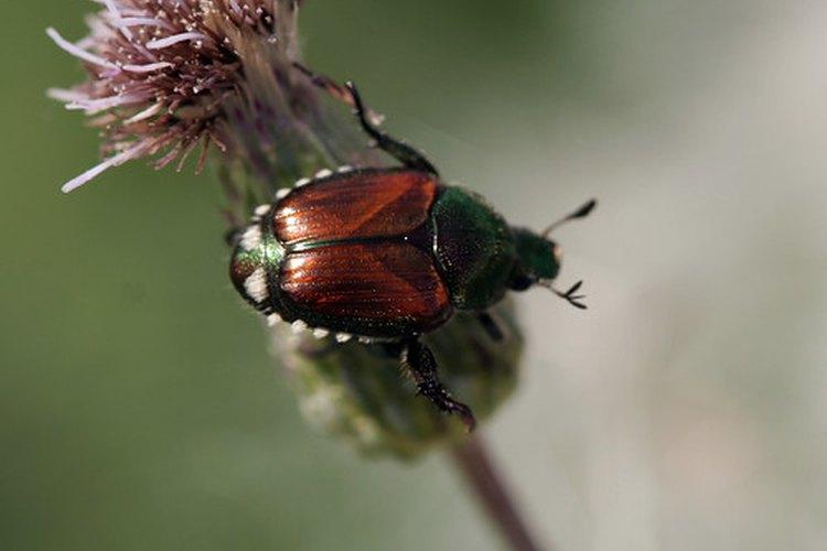 El insecticida Sevil controla las pestes indeseadas.