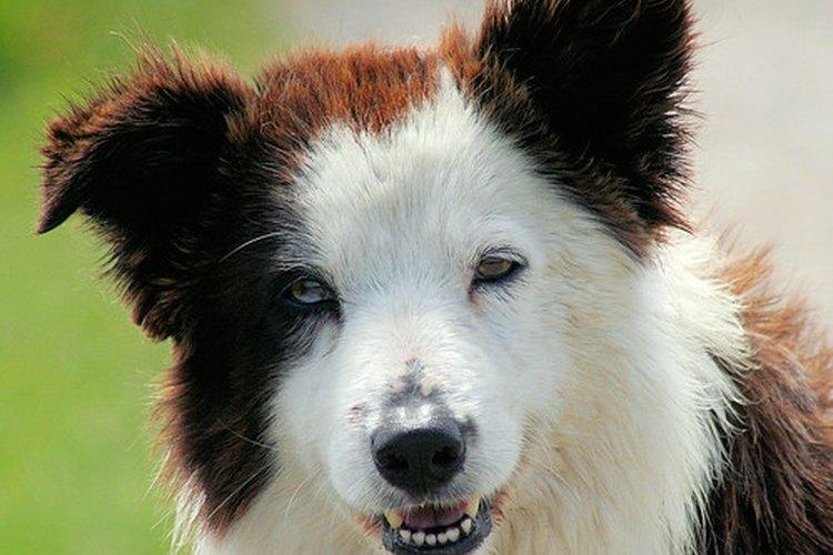 Los perros aman que les acaricien las orejas.