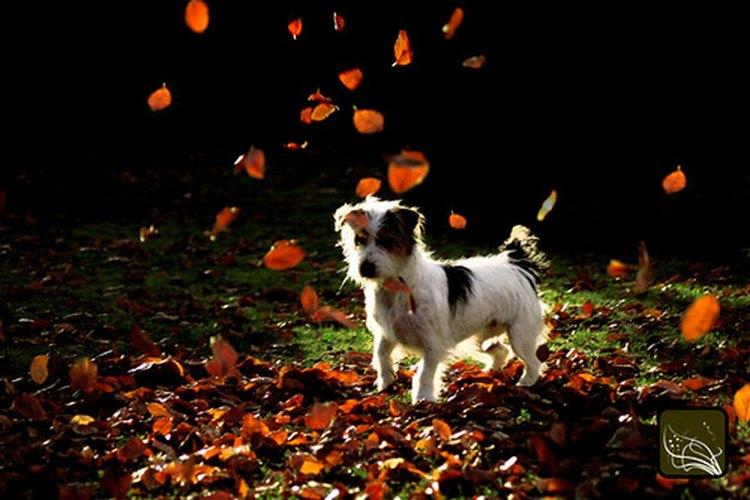 El cáncer puede ser un diagnóstico devastador a escuchar para cualquier dueño de un perro.