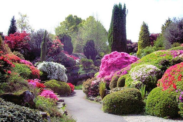 Las azaleas se utilizan comúnmente para decorar jardines.