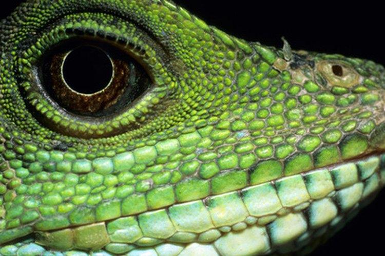 La piel de las aves y reptiles está cubierta de varias formas de escamas.