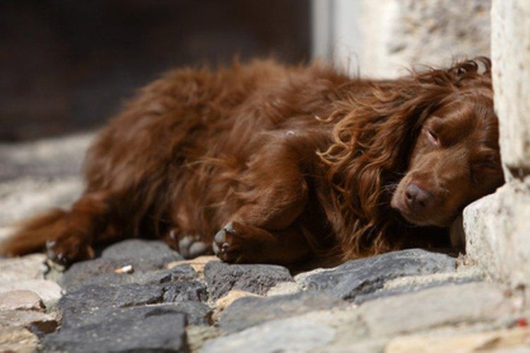 Los perros no están equipados con los mejores sistemas de enfriamiento.