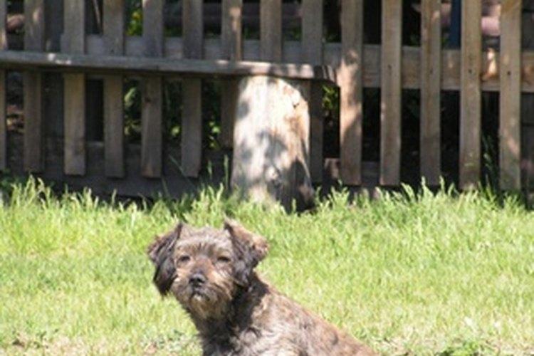 Una cerca alta y segura puede mantener a tu perro en el jardín.
