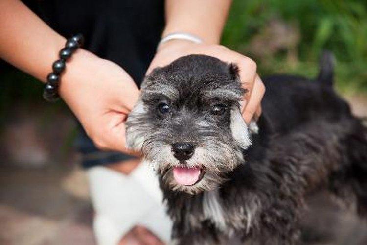 Es importante tener a tu mascota revisada por un veterinario en cualquier momento.