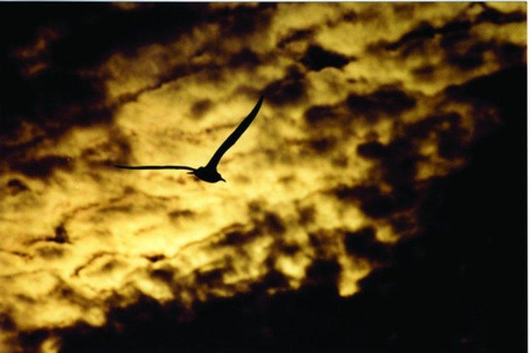La vida fue traída a Hawaii parcialmente por las alas de los pájaros.