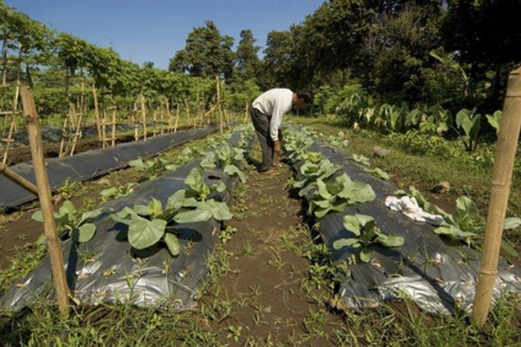 El USDA supervisa la producción agrícola de Estados Unidos.