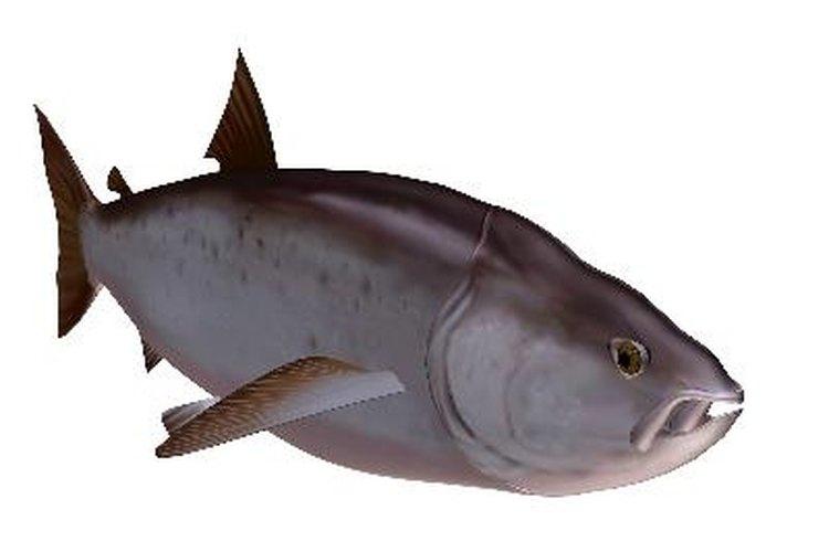 Técnicas para pescar salmón de río.