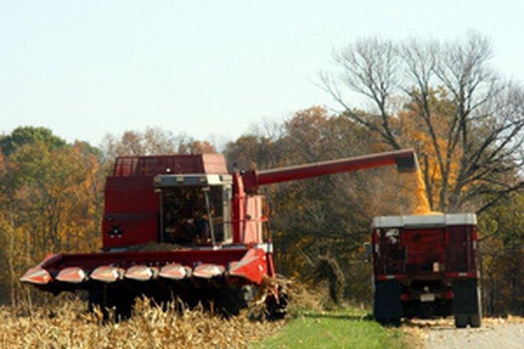 Los camiones de grano transportan la cosecha de los campos a las unidades de almacenamiento.