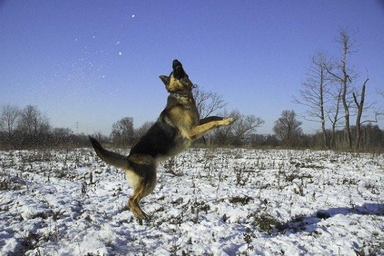 Un perro actúa de forma diferente cuando está estresado o no se siente bien.