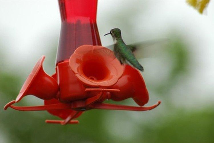 Atrae a los colibríes machos y hembras con comederos para pájaros.