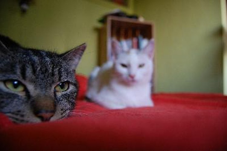 El retraso mental en los gatos ocurre de vez en cuando.