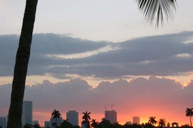 Hay muchas actividades que las parejas pueden hacer en la romántica ciudad de Miami, Florida.