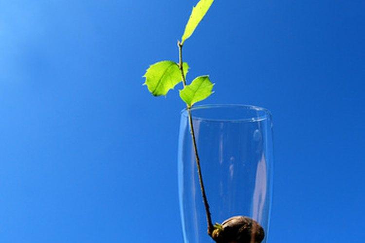 Louis Pasteur descubrió el efecto del magnetismo sobre las plantas.