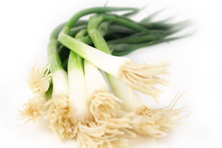 Los cebollines tienen bases estrechas y pueden comerse crudas.