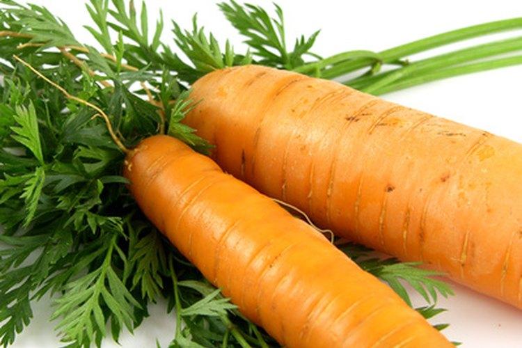 Las etapas de la vida de zanahoria son los de las plantas bienales.