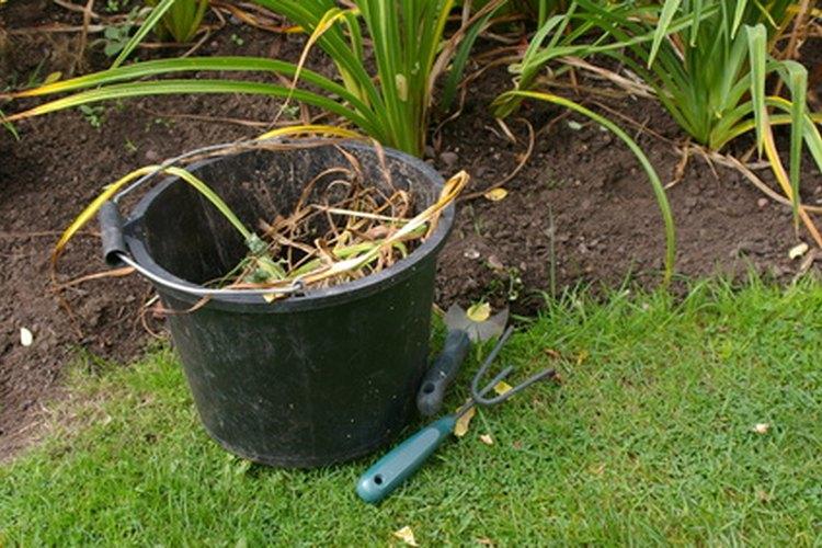 Las malezas son una parte natural de cualquier jardín.