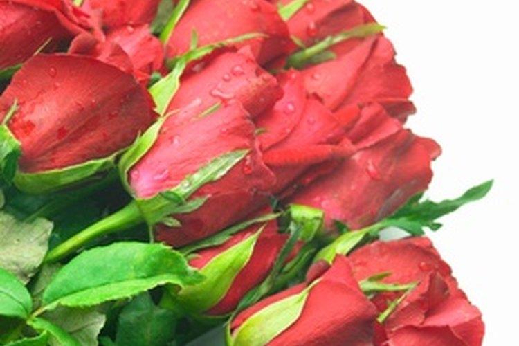 Las rosas rojas son un símbolo de amor.