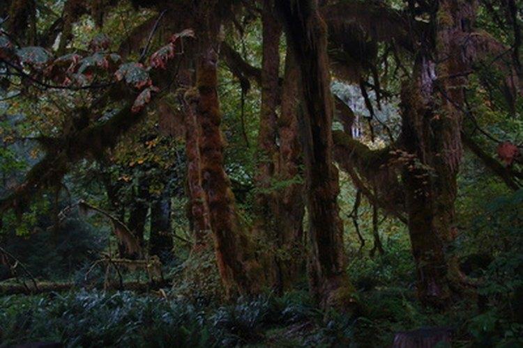 Unas cuantas plantas comunes pueden hallarse en los bosques tropicales.