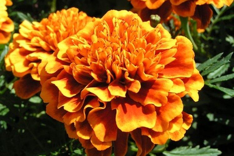 Las flores no se utilizan a menudo en proyectos de ciencia, debido a que sus semillas son generalmente muy pequeñas.