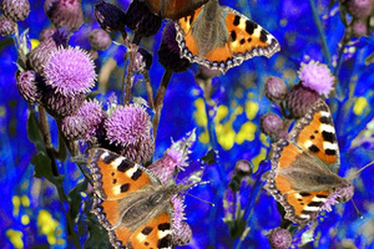 Las mariposas y su reproducción.