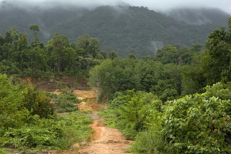 Las selvas tropicales son uno de los ecosistemas más diversos del planeta.